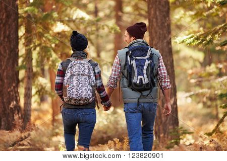 Couple enjoying hike in a forest, back view, California, USA