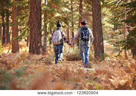Couple holding hands walking in a forest, back view, USA