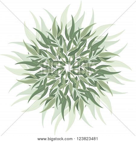 Abstract round ornament mandala with eucalyptus leaves. Circular botanical motif pattern isolated on white background