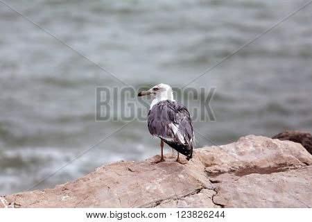 Seagull Perched On Rocks By The Rough Sea