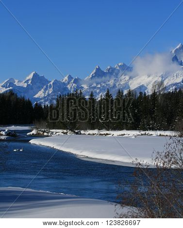 Swans in the Snake River below the Grand Tetons Mountain Range in the Grand Tetons National Park in Wyoming USA