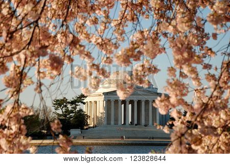 Jefferson Memorial with cherry blossoms framing the building during springtime