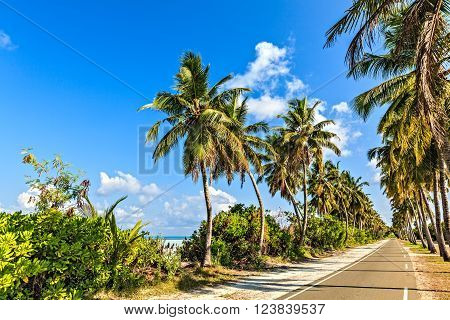 Tropical road with palmtrees on the island Gan in Indian Ocean Maldives