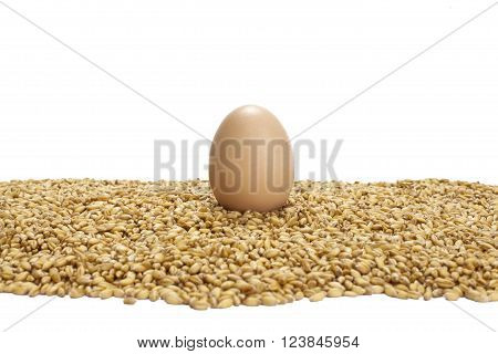 one chiken egg standing on wheat grains,isolated