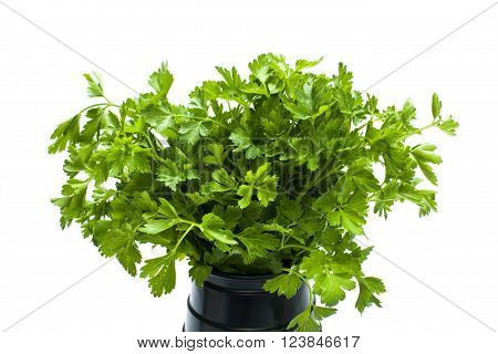 green leaves of parsley in a black vase isolated on white background