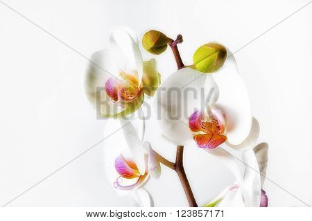 Orchids, a diverse and widespread family of flowering plants.