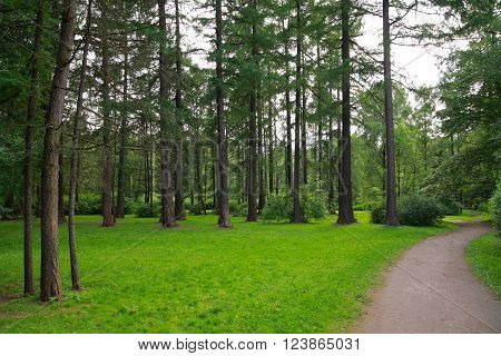 Pictured heref ootpath in a pine park