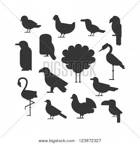 Birds black silhouette animal drawing and birds black silhouette design wildlife. Wings graphic birds black flight freedom birds. Vector Collection of nature black bird wildlife animal silhouettes.