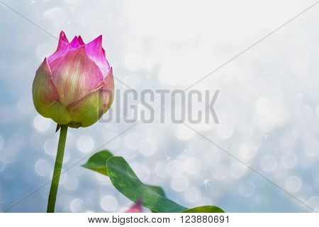 Lotus flower  on blure background of Thailand