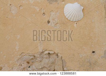 Shell Pilgrims Stone Detail Of A Religious Symbol For Pilgrims,