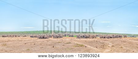 ADDO ELEPHANT NATIONAL PARK, SOUTH AFRICA - FEBRUARY 23, 2016: More than 200 elephants waiting in family groups to drink at Hapoor Dam