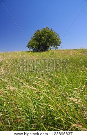 Landscape tree in the steppe against the sky