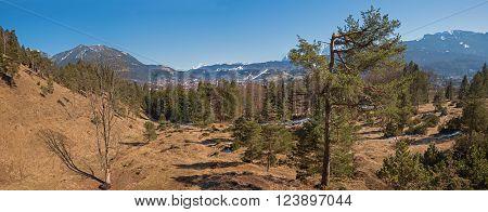 hillside landscape kramer mountain with conifers and view to garmisch bavaria