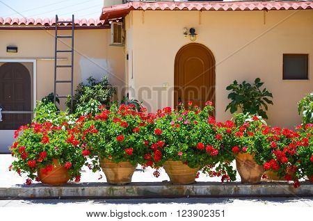 Flowers In The Monastery Of St. George Epanosifi (greece, Crete)