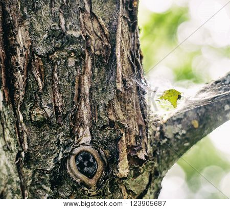 Cobweb on a tree trunkon a tree trunk. tree trunk isolated from background