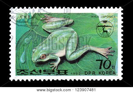 NORTH KOREA - CIRCA 1992 : Cancelled postage stamp printed by North Korea, that shows frog.