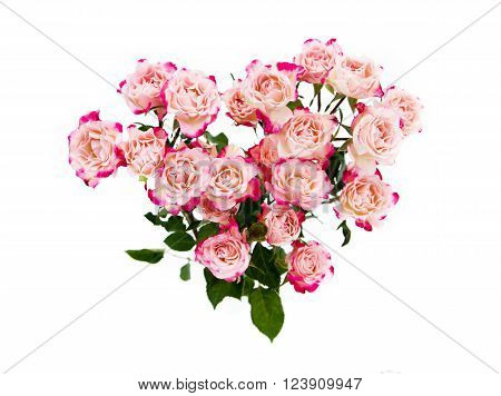 Flower pink  roses on a white background