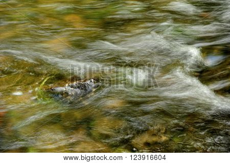 Small waves in the river Kamenice in Czech Switzerland