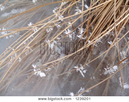 Grass And Ice