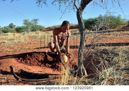Bushmen Hunter In The Kalahari Desert, Namibia
