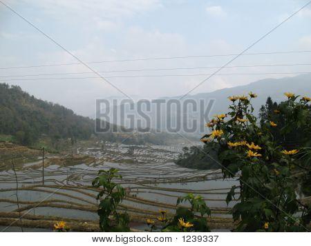 Terraced Mountains