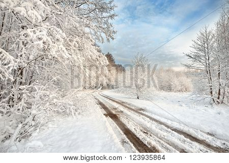 Road and snow covered trees in Latvia. Winter landscape.