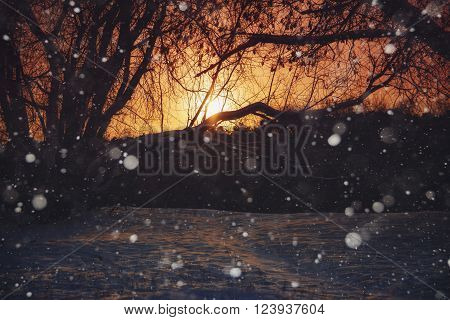 A view of trees, snowdrifts and snowflakes at sunset