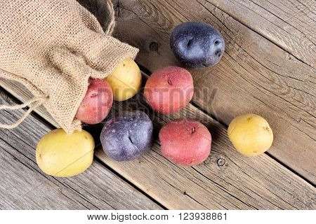 Above view of colorful fresh little potatoes spilling from burlap bag on a rustic old wooden background