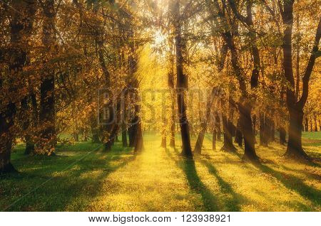 Autumn scenic landscape - autumnal forest lit by sunlight breaking through the tree branches. Soft focus processing