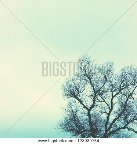 Moody blue bare tree and open sky background with room for copy