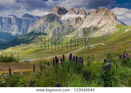 View over the meadows and the flowers in the Sella Group ** Note: Shallow depth of field