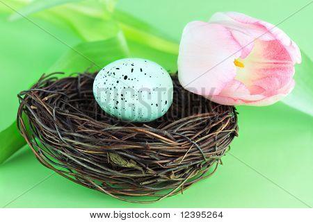 Ninho de pássaro e tulipa