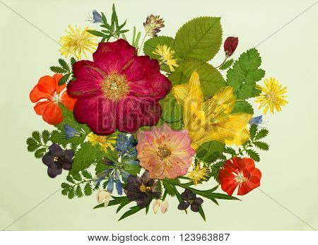 Bouquet of flowers on a light background. Pressed dried rosehip flowers lily geranium violet dandelion clover and lupine. Picture from dry flowers.