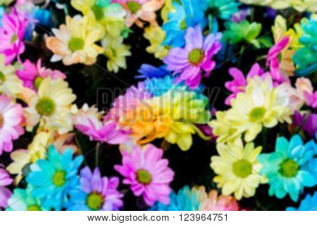 Colorful Of Rainbow Chrysanthemum Flower. Macro Of Rainbow Roses With Multi Colored Petals