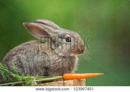 Portrait of cute baby rabbit bunny on stud with carrot against green bokeh background. ** Note: Shallow depth of field