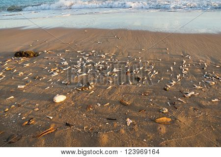 Beach with many shells and waves with copy space ** Note: Visible grain at 100%, best at smaller sizes