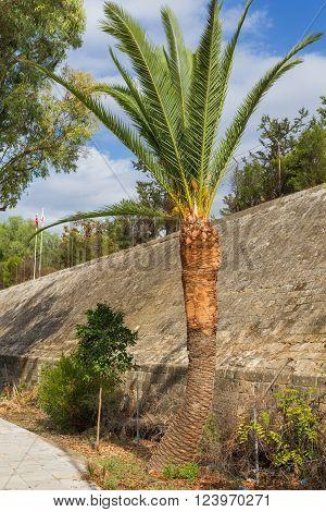 UN Green Line street palm tree Nicosia Cyprus
