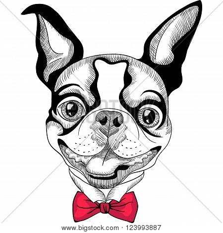 Hipster dog Boston Terrier in red bow tie smiling