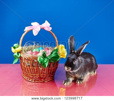Cute bunny and Easter basket on the red floor
