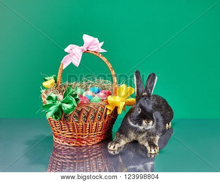 Decorated basket with Easter eggs and beautiful rabbit
