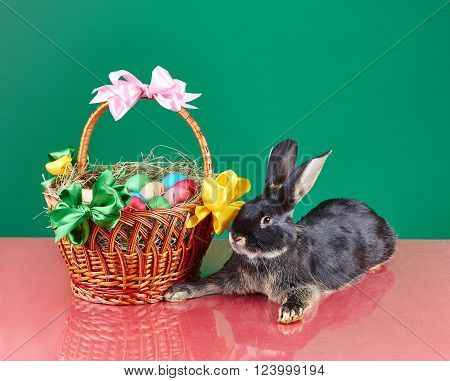 Little rabbit lies near the Easter basket on a green background