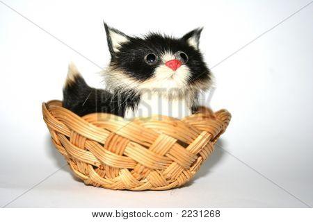Staring Cat4