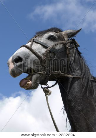Beautiful Horse Expression Head
