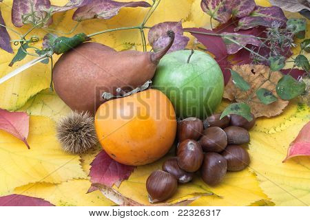 Autumnal Fruit Composition With Twigs