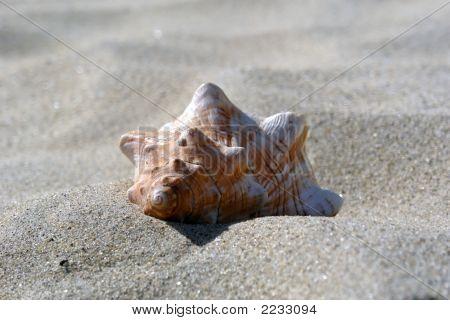 Revere Beach Shell