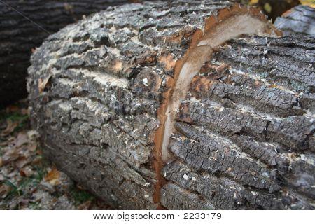 Timber-Felling