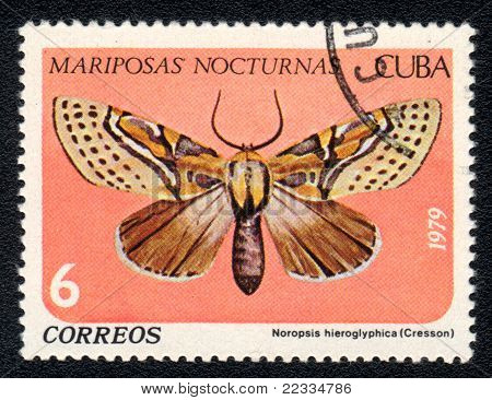 Noropsis Hieroglyphica
