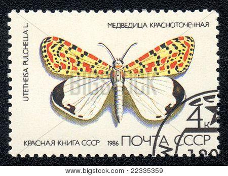 Utetheisa Pulchella