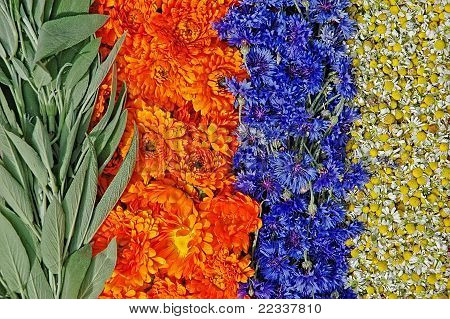 Sage,marigold,cornflower And Chamomile