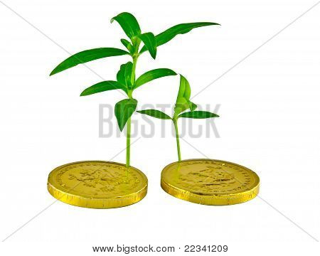 Plants On Gold Coin